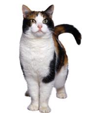 cat-black-tan.JPG