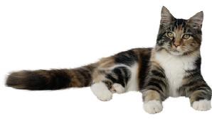 cat-lying-down.JPG